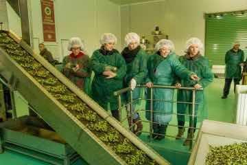 Olive oil Tour